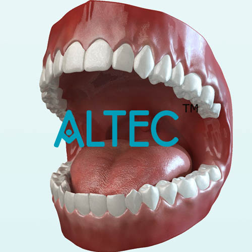 Teeth With Tongue Biology Human Anatomy Altecedulabc0978